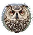 owl realistic artistic color portrait vector image vector image