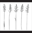 set of wild herbs silhouettes vector image vector image