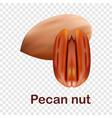 pecan nut icon realistic style vector image