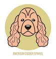 portrait of american cocker spaniel vector image vector image