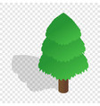 spruce isometric icon vector image vector image