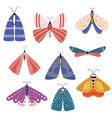 beautiful multicolored butterflies and moths with vector image vector image