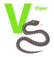 capital letter v viper on alphabet poster flat vector image vector image
