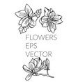 flower hand drawn set vector image