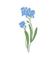 forget-me-not flowers isolated on white background vector image