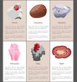 garnet carnelian diamond pink quartz ruby agate vector image vector image