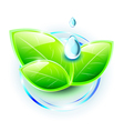 Green shiny leaves with small droplets of water vector image vector image