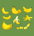 bananas food exotic tropical healthy fresh vector image