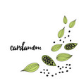 cardamom spice hand drawn style vector image vector image