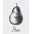 hand drawn pear engraving style hand vector image vector image