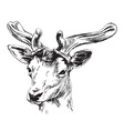 Hand sketch of a young deer vector image vector image