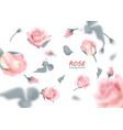 the buds of gently pink roses are flying in a vector image vector image
