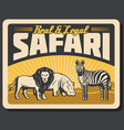 african lion hippo and zebra animals vector image
