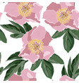 flower peony rose ornamental background vector image vector image