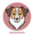 portrait australian shepherd vector image vector image
