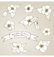 Set of hand drawn apple flowers vector image