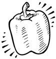 doodle bell pepper vector image vector image
