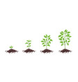 growth stages diagram sprout seedling shoot vector image