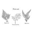 forest fern set vector image