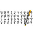 houseplants doodle set vector image