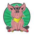 Pig skater sit in the middle circle vector image vector image