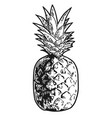 pineapple engraved sketch vector image vector image