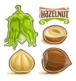 set of hazelnut nuts vector image