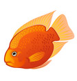 tropical cartoon fish orange midas cichlid or vector image vector image