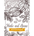 aroma spices and herbs hand drawn web banner vector image vector image