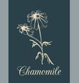 chamomile hand drawn vector image vector image