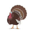 turkey cartoon mascot poultry farm fowl vector image