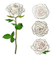 white rose blooms set with branch of summer flower vector image vector image