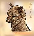 Alapca vector image vector image