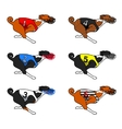 All color basenji dog running in dog racing dress vector image vector image