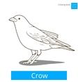 crow learn birds coloring book vector image vector image