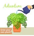 hand watering adiantum plant vector image vector image