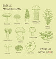 set drawings of edible mushrooms for your design vector image
