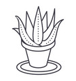 succulents aloe pot line icon sign vector image