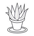succulents aloe pot line icon sign vector image vector image
