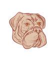 bullmastiff head etching color vector image vector image