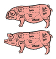 Hand drawn pig diagram Butcher diagram vector image