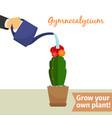 hand watering gymnocalycium plant vector image vector image