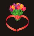 Tulip bunch vector image