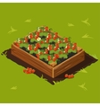 Berries Garden Wooden Box with Strawberry Set 14 vector image vector image