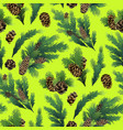 pine tree branches and cones vector image vector image