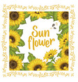 sunflower sunflower card design vector image