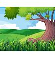 A big tree at the hills vector image vector image