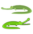 Crocodile isolated Good caiman Wild animal Green vector image vector image