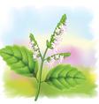 pogostemon plant vector image vector image