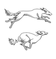 Running dogs saluki breed two poses vector image vector image